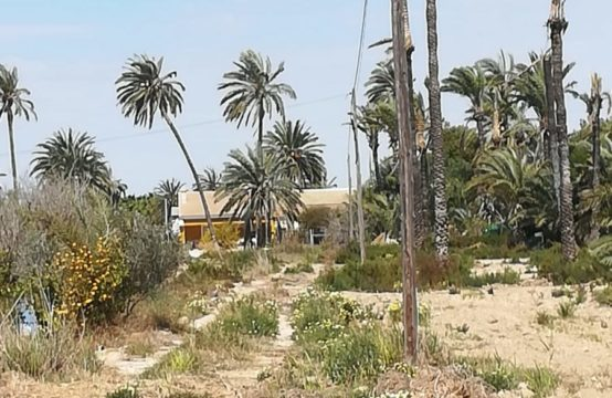 Finca with spacious plot in Elche LM82